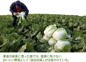 vol25_1_p1.jpg 松島ハクサイ