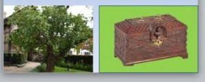 10371909_751011544935115_1189795233710940386_n シェークスピアが植えた桑の木