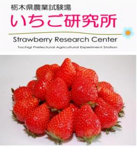 栃木県 いちご研究所