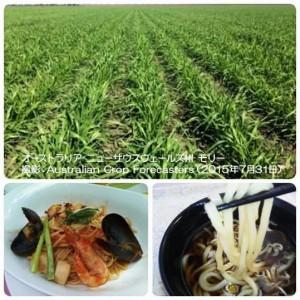 11885315_1692694697627312_3850110582924858380_n オーストラリア小麦畑