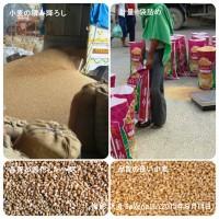 12004145_1702304036666378_5208240290976122776_n iインドの小麦