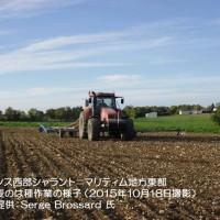 12189880_1710369989193116_7323845601832262125_n フランスの小麦畑