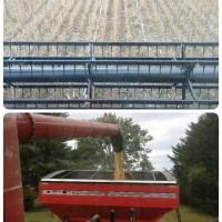 12299324_1717552228474892_8690201065134347958_n.jpg  【10月、農家は大忙し! in 米国ミシガン州】