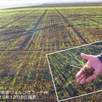 ロシアの冬小麦