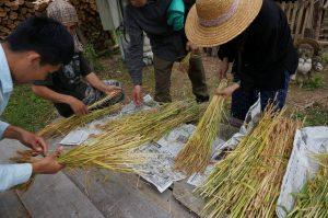 小麦タネトリ1-3