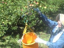 自然農梅の里 1-1