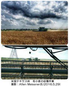 テキサス州の冬小麦の収穫