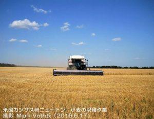 カンザスの小麦