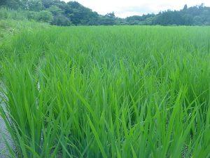杉田農園1-3