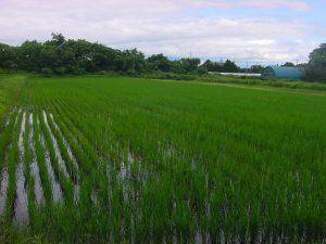 杉田農園1-2