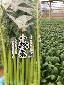 小松菜生産農家