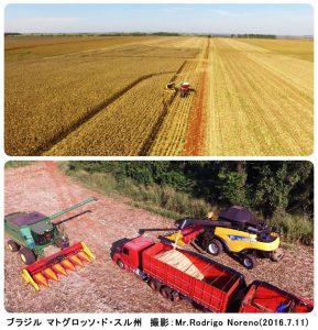 ブラジルの冬とうもろこしの収穫