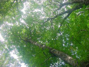 杉田さん使用のの木