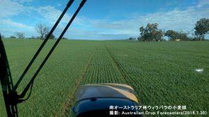 南オーストラリアの小麦