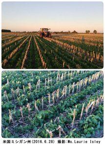 ミシガン州の大豆畑