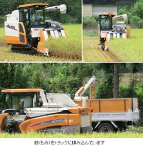 早期米の収穫