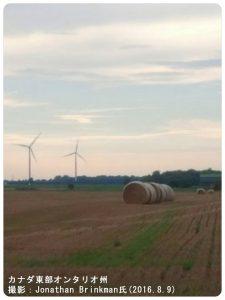 カナダの小麦