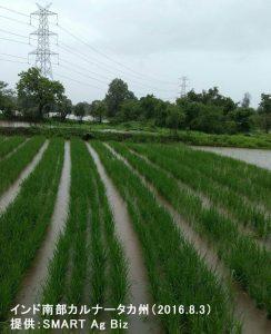 インドの雨季まい