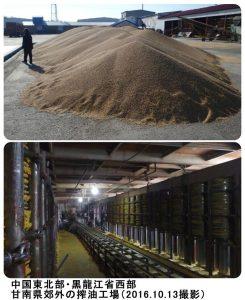 黒竜江省の大豆