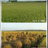 黒竜江省1-1