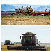 加州の稲作