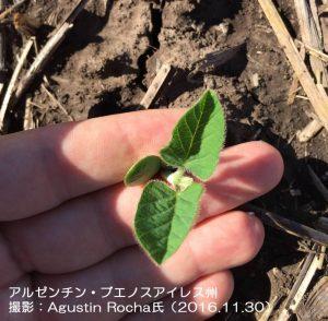 アルゼンチンの大豆播種作業
