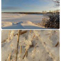 カザフスタンの小麦