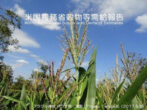 米国国務省穀物需給報告.