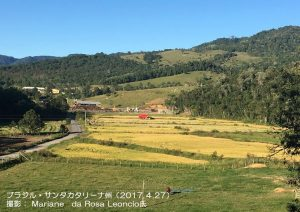 ブラジルの米生産