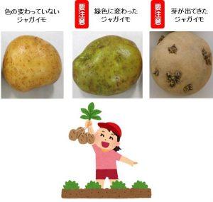 ジャガイモ栽培の注意