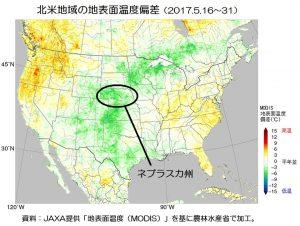 小麦畑で赤さび病が増加(米国ネブラスカ州)