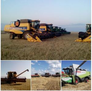 ウクライナ・カザフスタンの冬小麦.