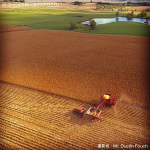 米国のとうもろこしの収穫1-1