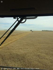 カザフスタンの春小麦1-3