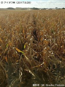 米国のとうもろこしの収穫1-2