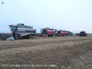 カザフスタンの春小麦1-1