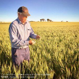 豪州の小麦