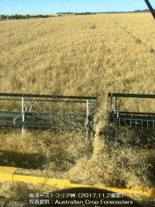 なたねの収穫が進行中(豪州南オーストラリア州)