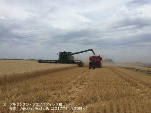 小麦畑(アルゼンチン)1-2.j